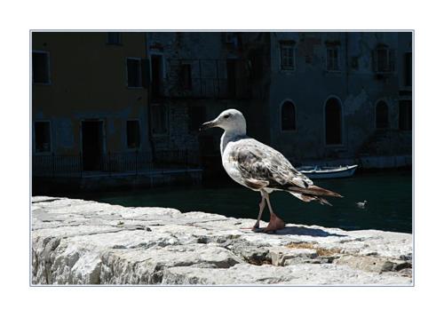 seagull 764067639 o