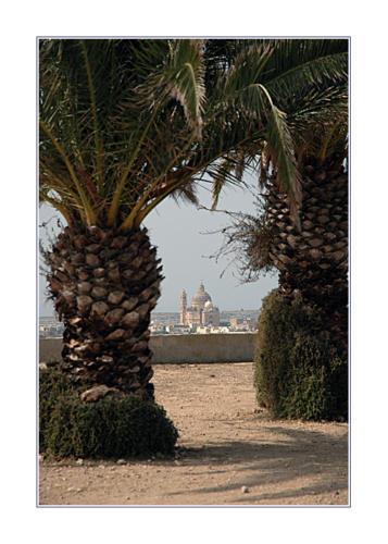church--palm-trees 219833488 o