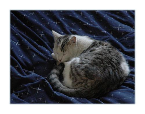 roger-sleeping 2239676767 o